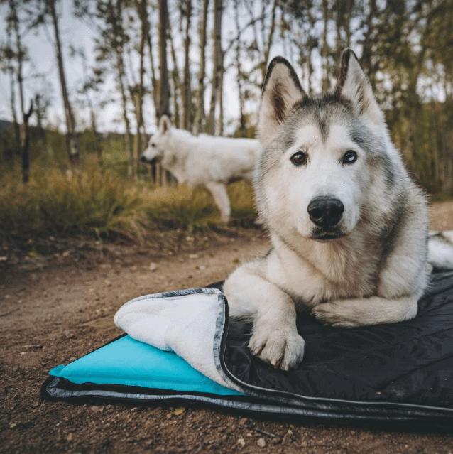 Rumpl Dog Travel Bed