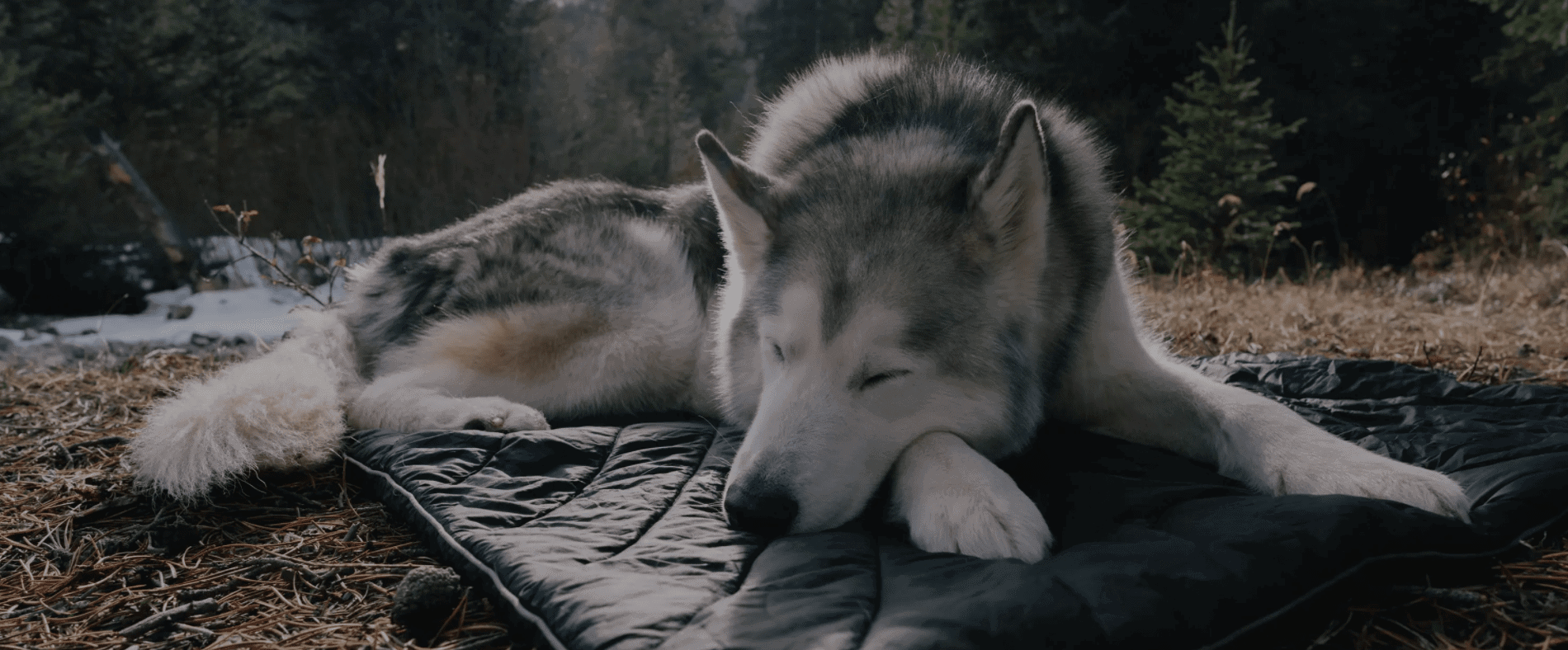 Rumpl Loki Travel Bed for Dogs